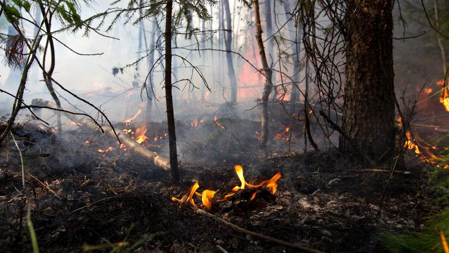 В России ликвидировали 74 лесных пожара за сутки