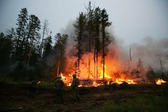 Сельхозпалы стали главной угрозой лесам, говорят в Минприроды