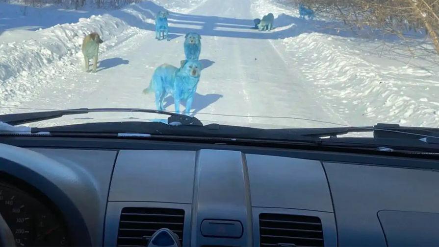 Голубые собаки возле завода «Оргстекло» в городе Дзержинск Нижегородской области