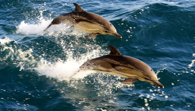 Следуй за дельфинами
