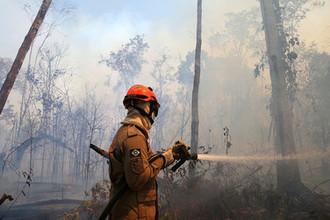 «День превратился в ночь»: кто уничтожает леса Амазонии