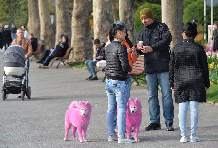 Розовые собаки на набережной в Геленджике, 2017 год
