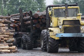 Рубил с плеча: как лес погубил министра