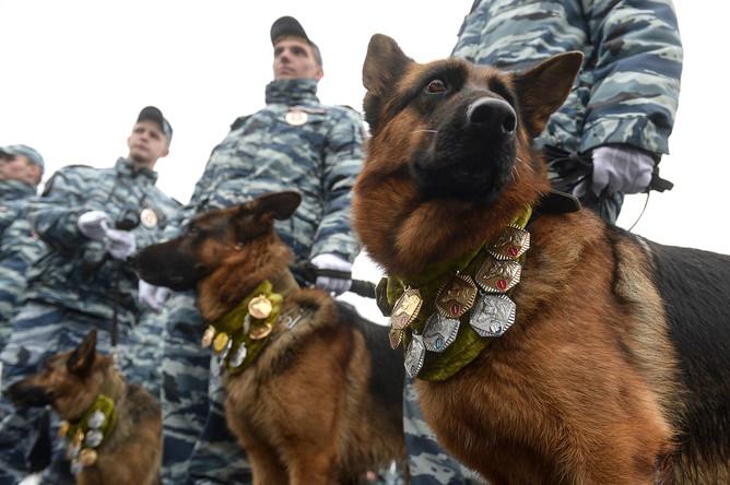 Служебные собаки на ежегодном спортивном празднике московской полиции