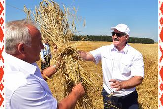 Президент Белоруссии Александр Лукашенко во время поездки в Могилевскую и Витебскую области, 18 августа 2017 года