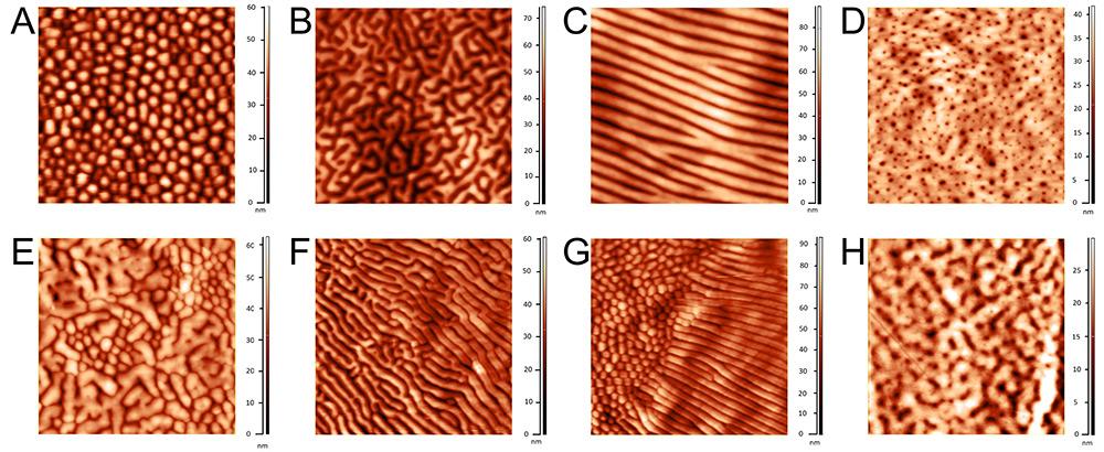 Разнообразие наноструктурированных покрытий на фасетках глаз различных групп членистоногих. (А и В) — наноструктуры ручейников (Trichoptera). Нерегулярный массив «ниппелей» у ручейника сем. Phryganeidae (A) и лабиринтоподобное нанопокрытие у сем.Limnephilidae (B). (C) Ярко выраженные параллельные тяжи на глазу паука. (D) Наноструктура в виде массива «дырок» на глазу уховёртки (Dermaptera). (E) Переходная структура- «ниппеля, сливающиеся в «лабиринт» у веснянки (Plecoptera). (F и G) Слияние отдельных «ниппелей» двукрылых в параллельные тяжи и «лабиринты» : полное слияние «ниппелей» в комбинацию тяжей и «лабиринта» у слепня (Tabanidae) (F); «ниппеля», расположенные в центре фасетки долгоножки (Tipulidae) частично сливаются в параллельные тяжи у краёв фасетки (G). (H) Cлияние отдельных «дырок» в «бороздки» и «лабиринт» у шмеля (Apidae, Hymenoptera). Все изображения имеют размер 5х5 мкм, кроме Н (3х3 мкм). Высота поверхности обозначена цветовой шкалой, указанной рядом с каждым изображением.