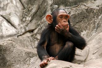 У обезьян обнаружены две базовые модели поведения, закодированные в сигналах мозга