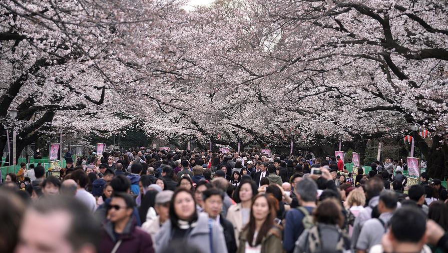 Посетители в парке во время цветения сакуры в Японии, март 2018 года