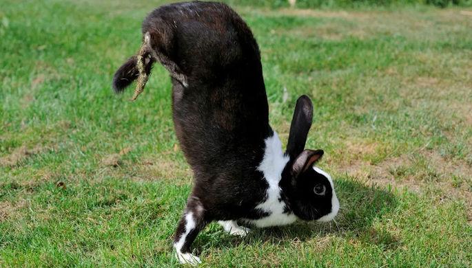 Генетические мутанты: почему кролики ходят на передних лапах