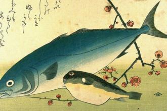 Рыбы желтохвост и фугу, иллюстрация художника Утагава Хиросигэ