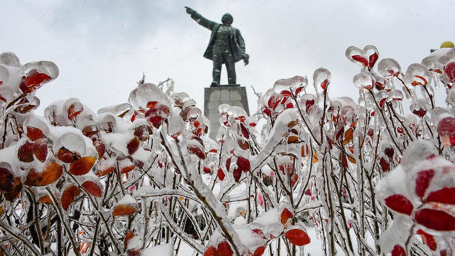Обледеневшие цветы напротив памятнику Ленину во Владивостоке, 20 ноября 2020 года