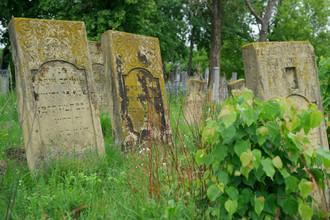 Изяслав. Редкий случай хорошо сохранившегося еврейского кладбища. Фотография: Лео Вайн