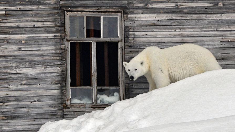 Die Welt: Запад возмущен стратегией России в Арктике