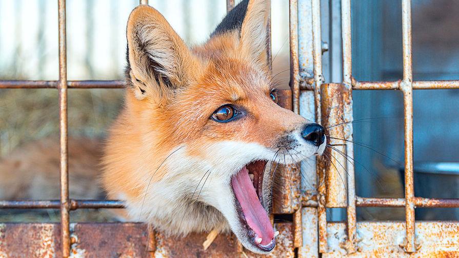 Как животные сбегают из зоопарков