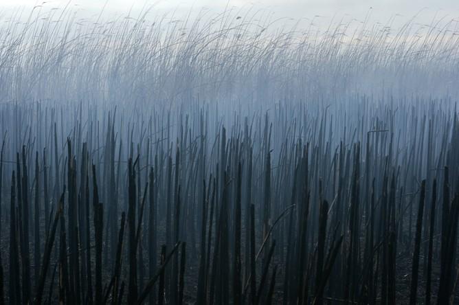 Волонтеры Greenpeace тушат тростник в дельте Волги