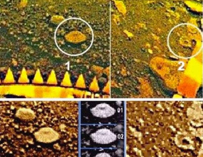 Фрагменты панорамы «Венеры-13». Кружками выделены объекты, напоминающие складчатую шапку...