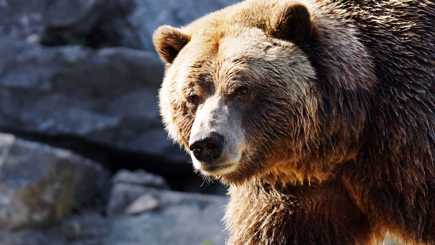 Медведь прибежал в центр Магадана