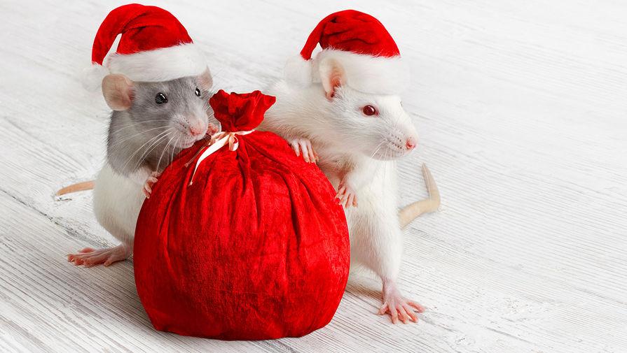 Белая крыса надежд и покоя