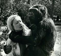 Психолог Франсин Паттерсон и горилла Коко, 1972 год