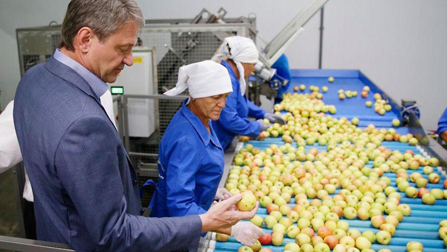 Глава Минсельхоза Александр Ткачев оценивает урожай отечественных яблок
