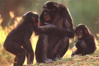Приматы помнят, что с ними было