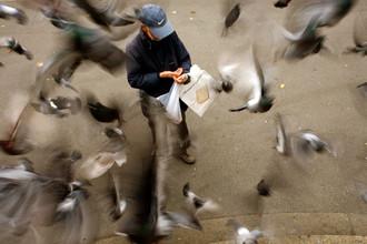 Мужчина и голуби на улице Цюриха, 2007 год