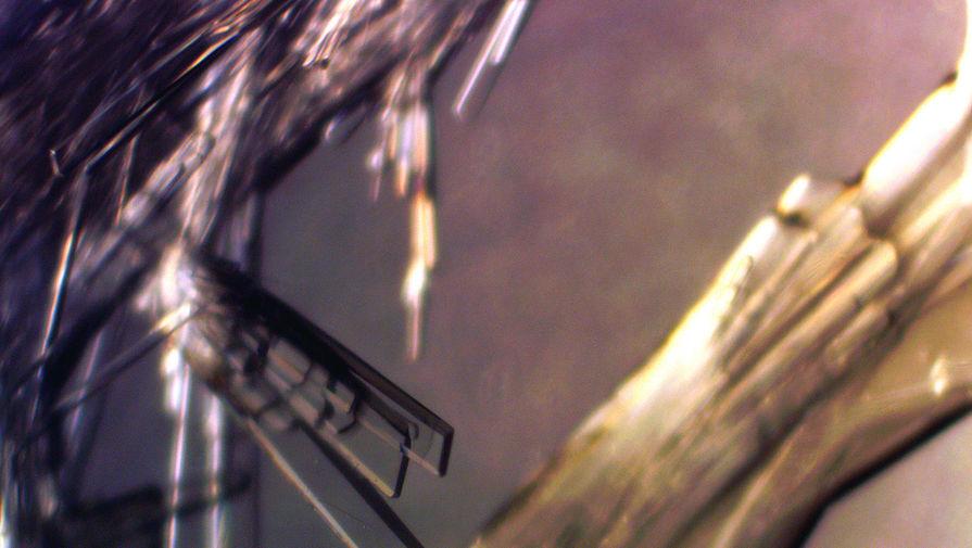 Кристаллы комплекса неодима под микроскопом.