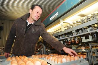 Фермер осматривает яйца, произведенные на фабрике во Франкфурте, Германия