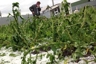 Урожай замерзнет и сгниет