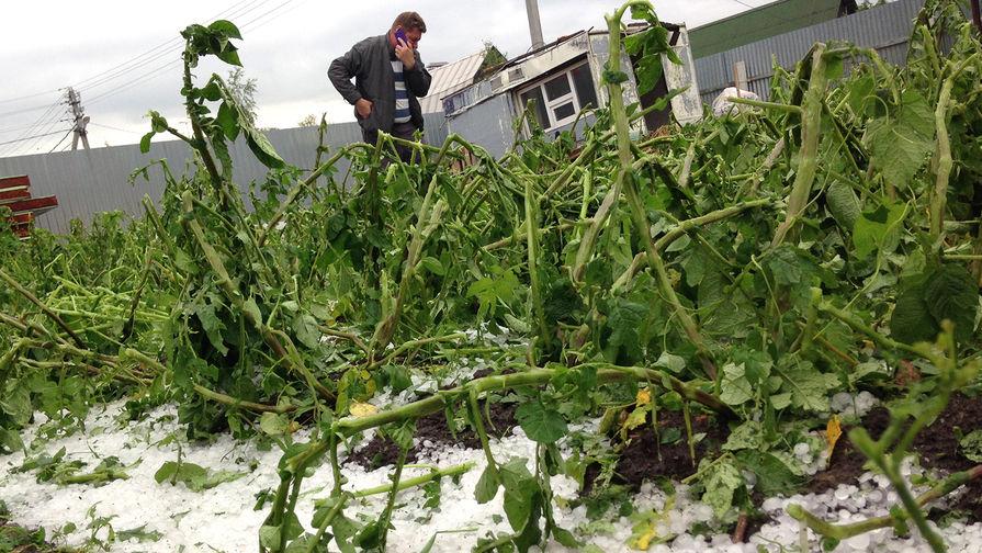 Заморозки из овощей на зиму