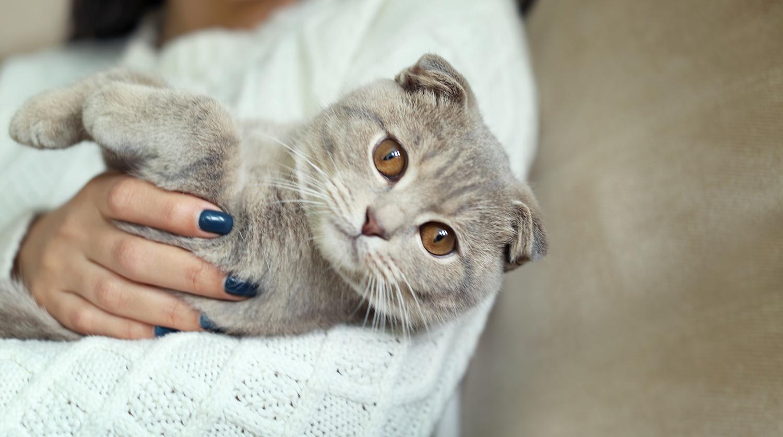 панлейкопения и коронавирус кошек