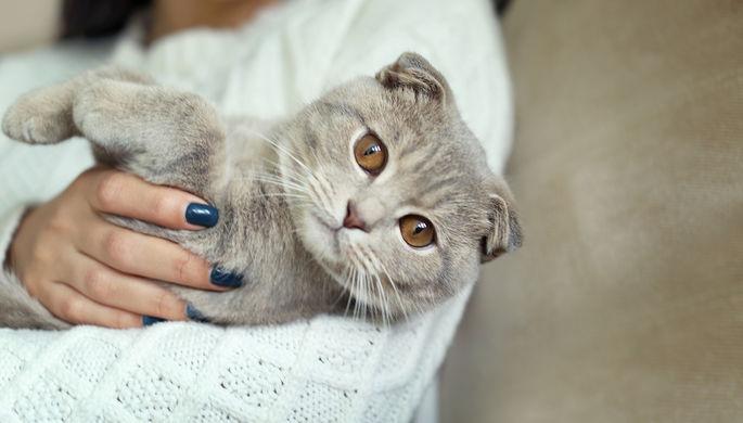 Женщины и ветеринары: кто знает, что чувствуют кошки