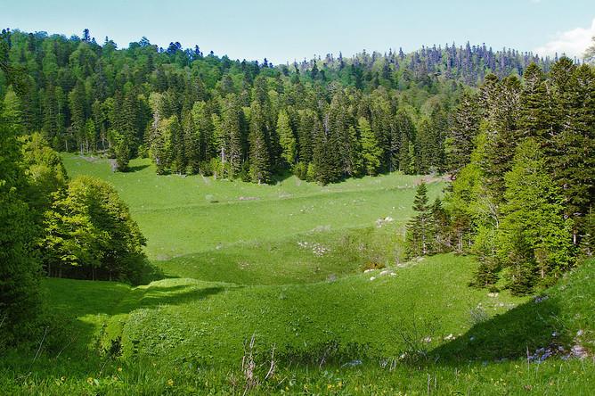 Лесное законодательство относит часть горных лесов к защитным. Их функция- защита горных склонов от эрозии, предотвращение схода снежных лавин, селей, оползней. Также они преграждают путь сильным ветрам и не дают сойти холодным массам воздуха в долины. Они регулируют сток дождевых и талых вод, предотвращают паводки и обеспечивают полноводность рек.