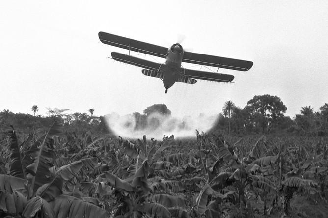 Советский самолет Ан-2 во время опыления банановых плантаций в Гвинейской Республике, 1962 год
