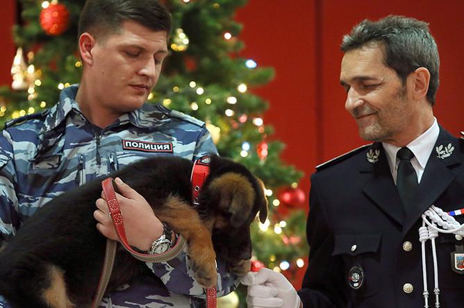 Передача щенка Добрыни французской полиции в посольстве Франции