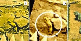 а) Амисада, взбирающаяся на камень. б) Совмещение шести исходных фрагментов панорам «Венеры-14». в) Австралийская ящерица Shingleback, размерами, формой и медлительностью напоминающая амисаду