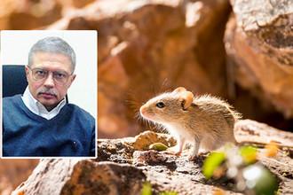 Погорел на мышах: российский креационист ответил по статье