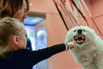 Посетители у чучела полярного волка в Дарвиновском музее во время международной акции «Ночь в музее», 20 мая 2017 года