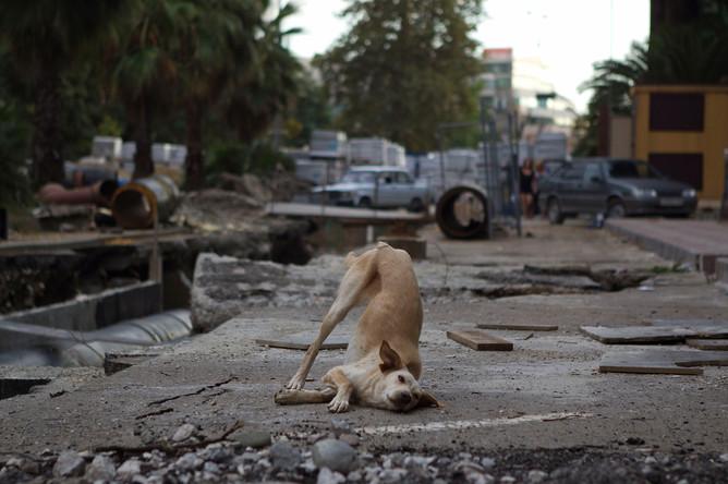 Собака на одной из улиц в центре Сочи
