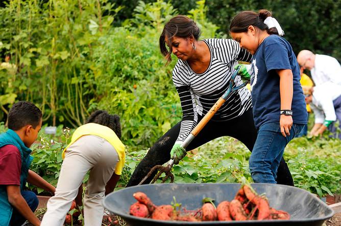 За год Мишель Обама собирает около 350 кг овощей со своей грядки