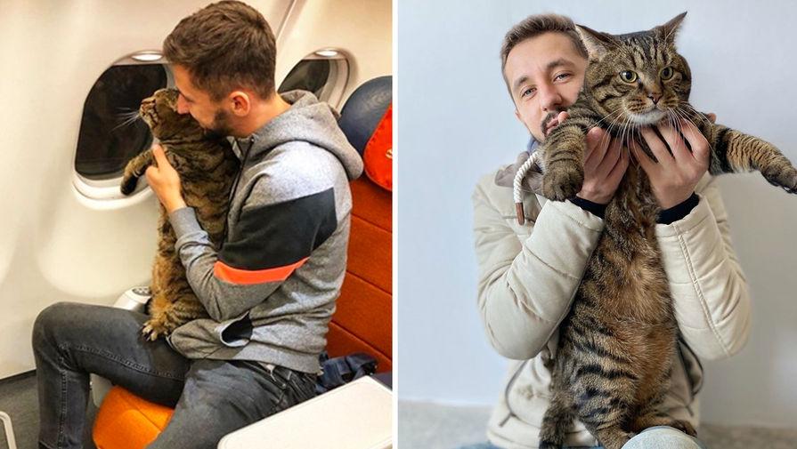 Толстый кот Виктор, которому удалось попасть на борт самолета