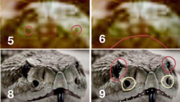 «Это камни»: ученого затравили за змей на Марсе