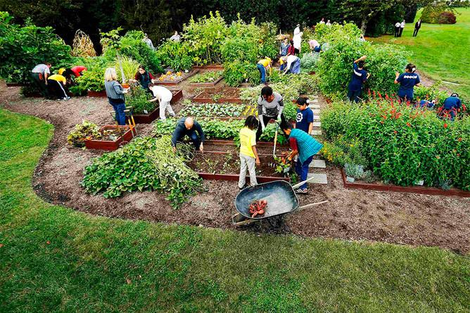 Традиционно первой леди помогают американские школьники, которые узнают каждый год что-то новое об овощах, например, многие ребята были удивлены, что зеленый горошек можно есть сырым прямо с грядки, как это делает Мишель Обама.