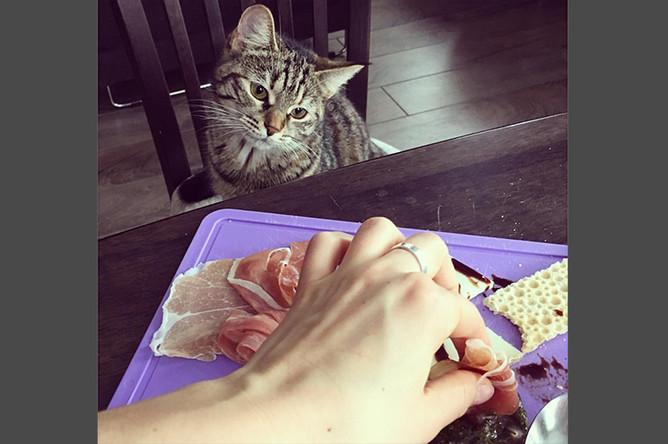 «Ну ладно, угощайся» завтрак проходит под четким контролем. Забугорную еду просто так не поешь»