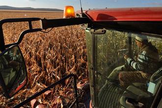 Новая беда: чем грозит России урожай