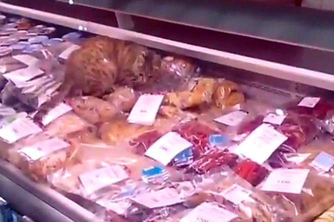 Кошка Матроскина, съевшая морепродуктов на 60 тысяч рублей в аэропорту Владивостока
