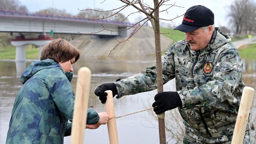 Президент Белоруссии Александр Лукашенко во время посадки деревьев в рамках республиканского субботника в агрогородке Александрия Шкловского района, 17 апреля 2021 года