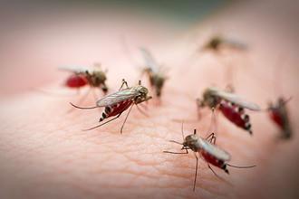 Комары отреагировали на теплую весну