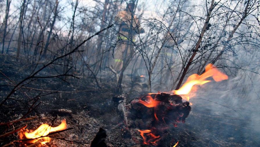 """Мэр Усть-Кута заявил о """"политическом окрасе"""" ситуации с поджогом леса"""