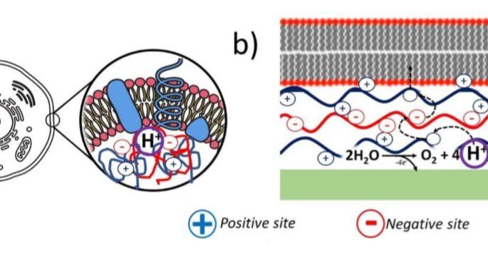 Ученые смогли изучить ионные токи, передающие информацию в организме